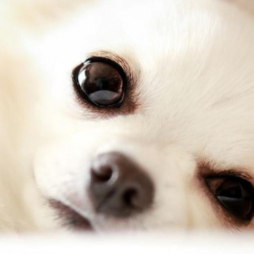 【獣医師執筆】犬の「目やに」の原因とは?対処法も伝授