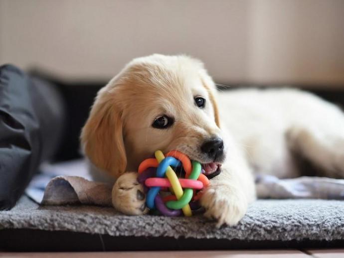 歯磨きだけじゃ足りないかも?犬の歯に良い「デンタルケア商品」を獣医師が紹介
