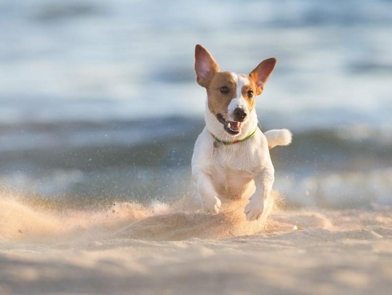犬にも起こる!夏バテ・熱中症を防ぐため日頃から注意すること