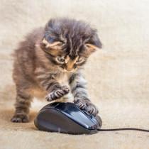 ペットが他の動物になったらどんな顔?最先端のコンピューター技術を用いたサービスを紹介~猫編~