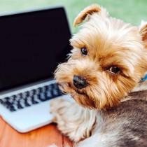 ペットが他の動物になったらどんな顔?最先端のコンピューター技術を用いたサービスを紹介~犬編~