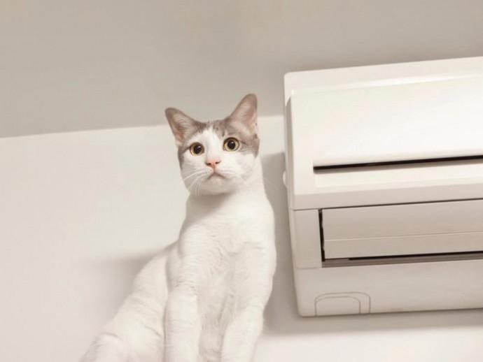 【獣医師執筆】夏場エアコンの適温は◯度!猫が室内で快適に過ごす環境作り