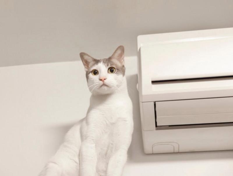 夏場エアコンの適温は◯度!猫が室内で快適に過ごす環境作り