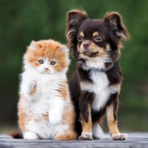 実は視力が悪い?色が分からない?犬と猫の目の仕組みを獣医師が解説