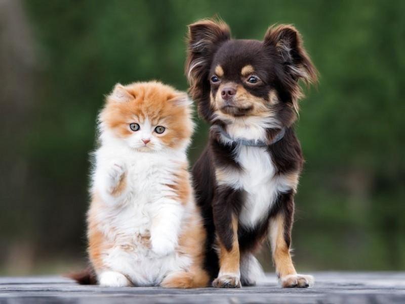 【獣医師執筆】実は視力が悪い?色が分からない?犬と猫の目の仕組みを獣医師が解説