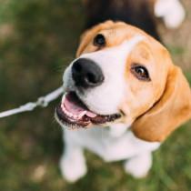 最初が肝心!愛犬のお散歩デビューを成功に導く方法