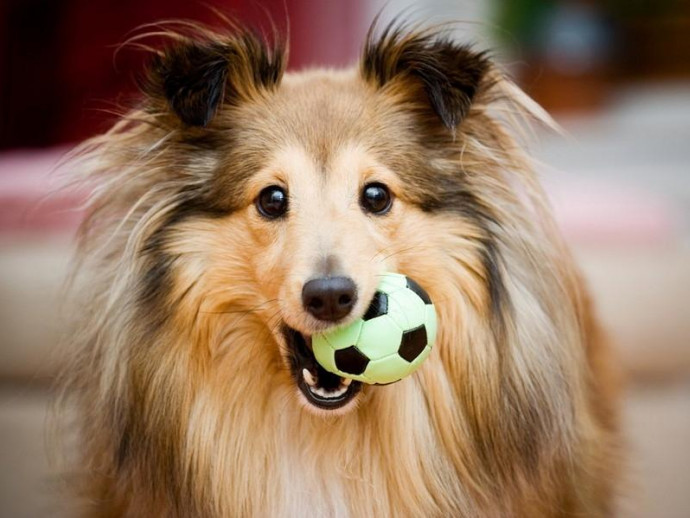 100均で手に入る!犬用おもちゃ選びのコツ&効果的な遊び方をドッグトレーナーが解説