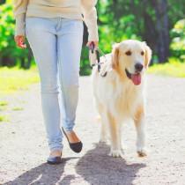 スマホに入れておきたい!愛犬の体調管理に使えるペットケアアプリ3選