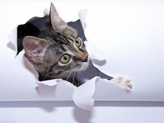 原因を知ってイライラとおさらば!猫がイタズラする理由と防止策