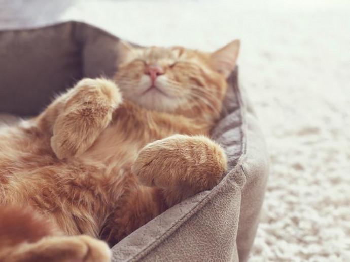 仰向けにごろ~ん…撫でてもいいの?猫がお腹を見せる本当の理由