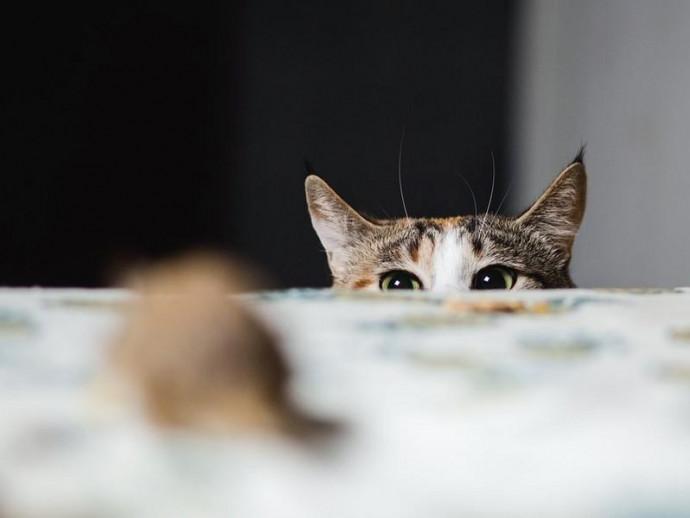 猫の手も借りたい…!ネズミ駆除に猫を使ったところ驚きの結果に
