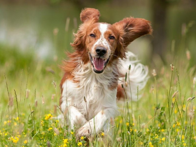 活発で忠実、だけど…!? 元猟犬の特徴や飼い方の注意点を解説!