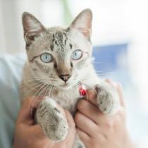 目の健康のために!猫にとらせてあげたい成分とサプリメントの選び方