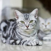 肉球は人を元気にする力があった!? 獣医師から見た「猫の魅力」