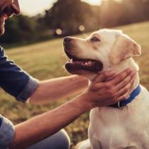 犬の皮膚病の原因は紫外線と◯◯…!家庭でできる簡単ケアをご紹介