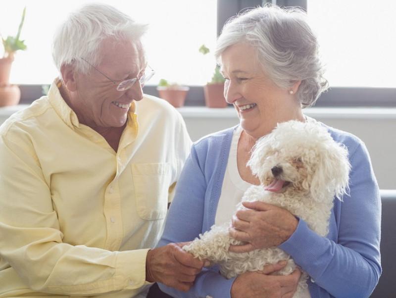 【獣医師執筆】犬にも老眼はあるの?加齢が目に与える影響を解説!