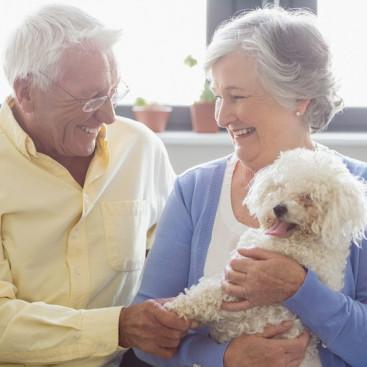 犬にも老眼はあるの?加齢が目に与える影響を獣医師が解説!