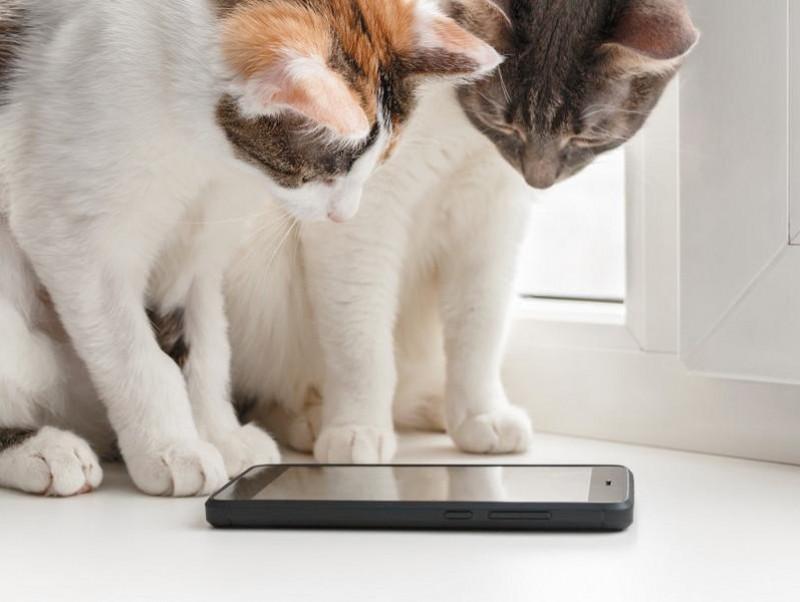 癒される!タメになる!猫のおすすめYouTubeチャンネル4選
