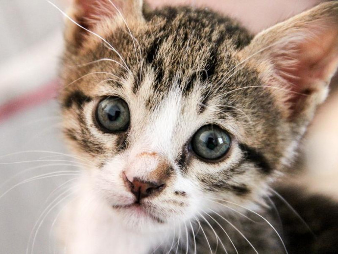 子猫の譲渡は生後◯ヶ月になってから!猫の子どもを引き渡しするときの注意点