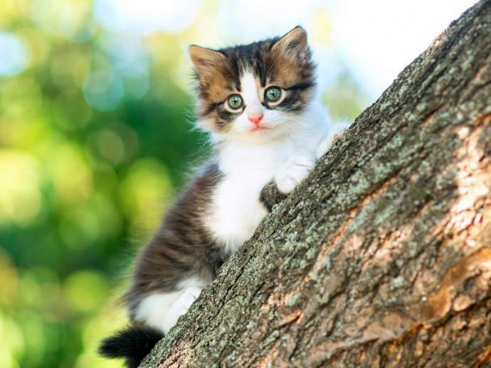 「降りられにゃい!」猫が高所から降りられなくなった場合の対処法と家庭での対策