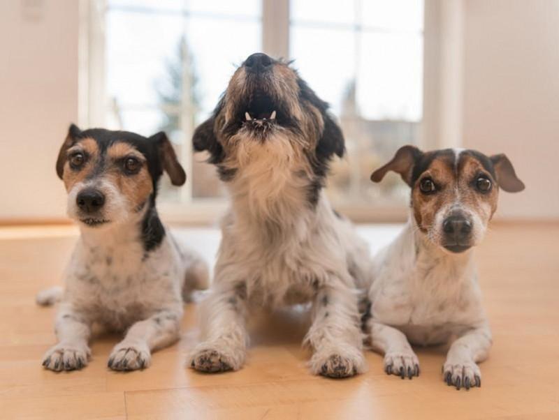 犬がチャイムに吠えるのはなぜ?無駄吠えをしつける4つの方法