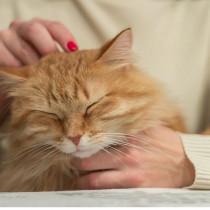 【獣医師執筆】猫がナデナデされて嬉しいときは?撫でられているときの猫の気持ちを行動学目線で解説