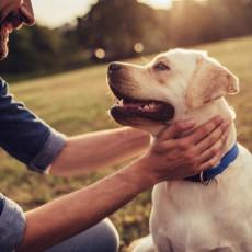 【獣医師執筆】その行動、絶対NG!犬との信頼関係を壊す飼い主の行動4つ