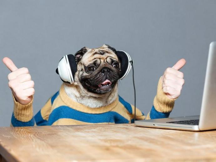 思わずクスッ!動画アプリ「TikTok」で話題の人気犬5選