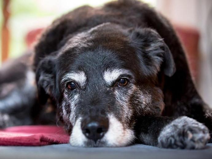 シニア犬になったら気をつけることは?シニア犬の特徴やケアを紹介