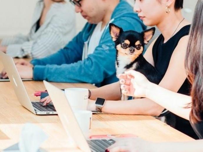 癒やしだけじゃない!人も犬も働きやすい「犬社員」がいるオフィス2選