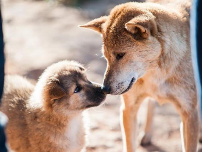 犬は飼い主の気持ちが伝わっている!? 犬と人でも起こる「情動伝染」