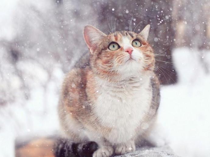 猫の「寒い」サインを見逃さないで!寒さを感じる時にする仕草と寒さ対策