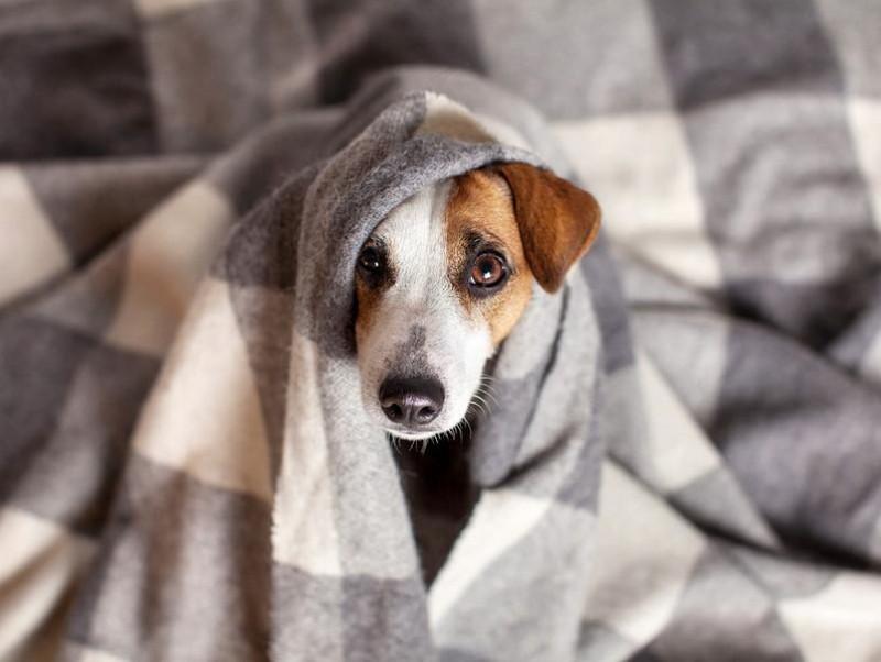 室内犬と室外犬、寒さ対策の違いは?犬の寒さを感じているときの仕草と対策