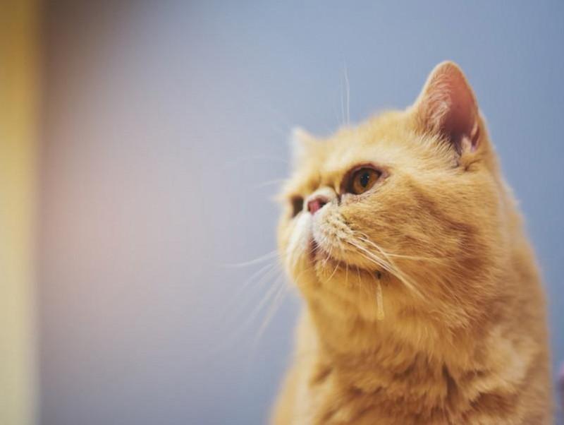 口からブクブク…猫の「よだれ」に気をつけて!考えられる原因7つ