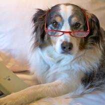 【シニア犬と暮らす皆さま必見!】老化のサインを見逃さないで