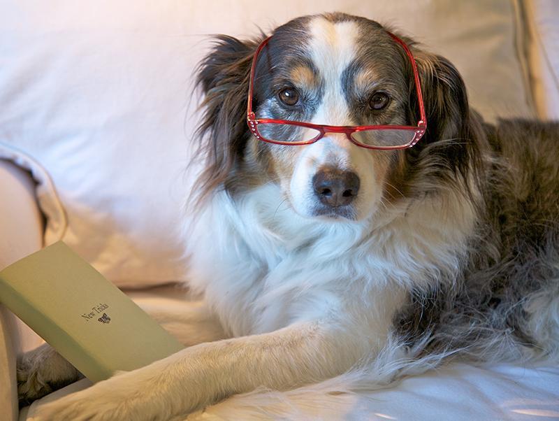 【シニア犬と暮らす皆さま必見!】老化のサインを見逃さないで<PR>