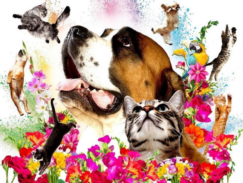 日本最大級のペットイベントが今年も開催!「Pet博2019なごや」「Pet博2019大阪」