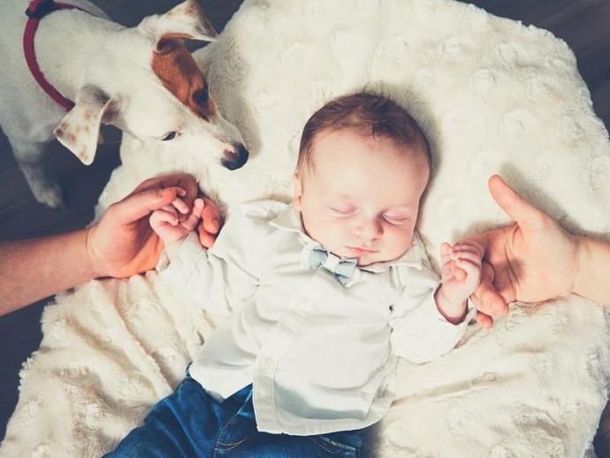 犬が赤ちゃんにやきもちするときはどうしたらいい?嫉妬行動の理由と対策