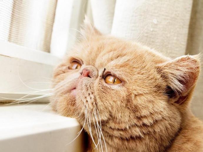 愛猫の年齢は人でいうと何歳?猫の年齢を見分ける方法