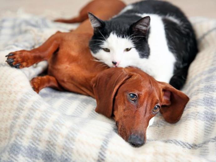 季節の変わり目の体調管理!犬猫が秋に気をつけたい室温管理と花粉症について