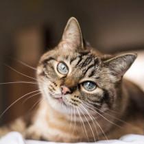【獣医師執筆】高齢になる前に愛猫へできることは?シニア猫の特徴と飼い主さんが気をつけたいこと