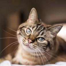 高齢になる前に愛猫へできることは?シニア猫の特徴と飼い主さんが気をつけたいこと