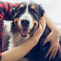 愛犬の「大好き!」サインに気づいていますか?犬が愛情表現をしているときのしぐさや行動