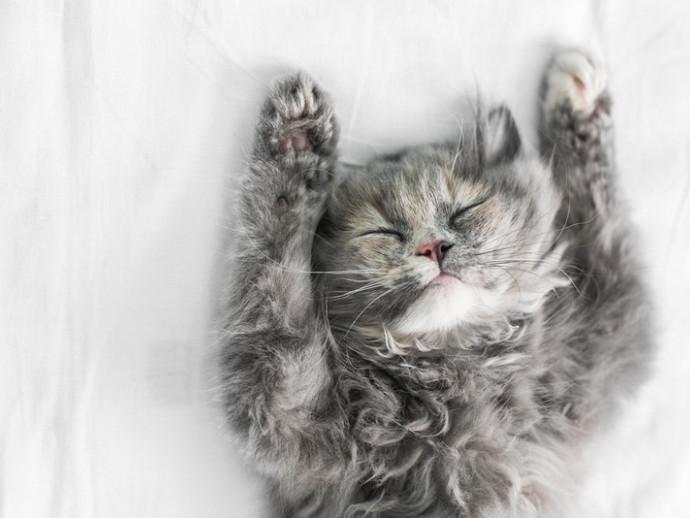 なんて幸せそうなの…♡無防備な寝姿にキュン! インスタから「ヘソ天」猫を紹介