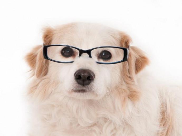 犬の「視力」はどうやって調べるの?視力低下のサインと家庭で試したいセルフチェック