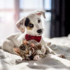 動物愛護週間とは!?何をすればいいの?