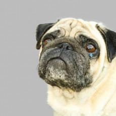 【獣医師執筆】犬って泣くの?「涙」を流す理由と悲しんでいるときにする行動