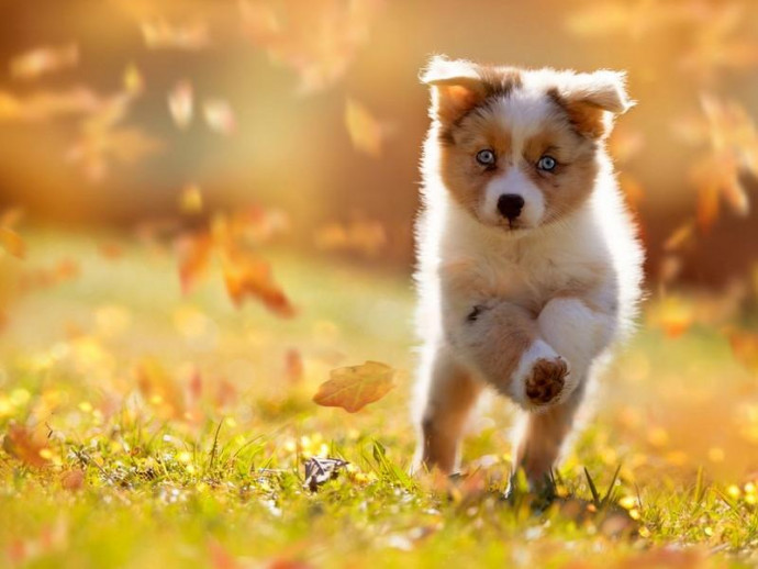 夏が過ぎても油断大敵!秋に発症する犬の皮膚トラブルの原因は?