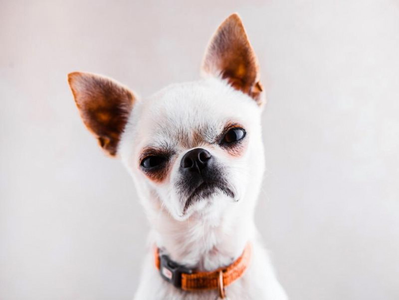 「放っておいて欲しいワン!」犬のサインを読み取れないとこうなる!問題行動症例を紹介