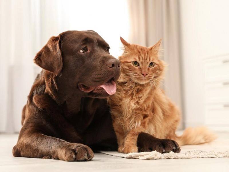 気になる「ペット保険」の疑問解決!愛犬・愛猫のためのおすすめの選び方